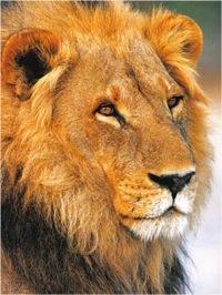 leul1