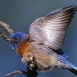 Poză de profil pentru aviva