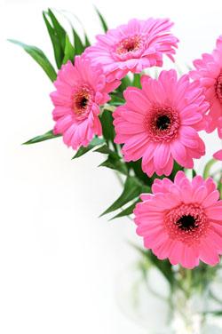 Florile mele!!!