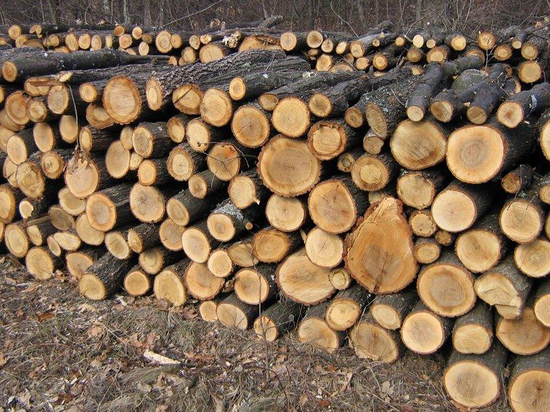 VEZI VIDEO – 40 de batrani ai strazii au nevoie urgenta de lemne de foc