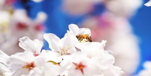 Spring_time_Free_Wallpaper_by_intensepizza-Copy1